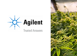 Multi-Element Analysis of Cannabis using the Agilent 7800 ICP-MS